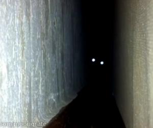 foto gato noche